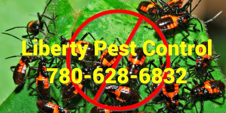 pest control winter