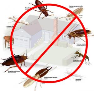 residential pest exterminator
